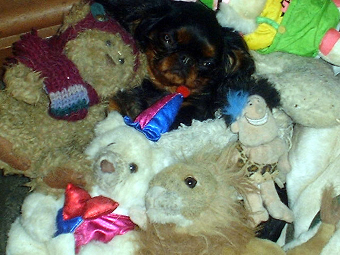 Missy with her plush toys