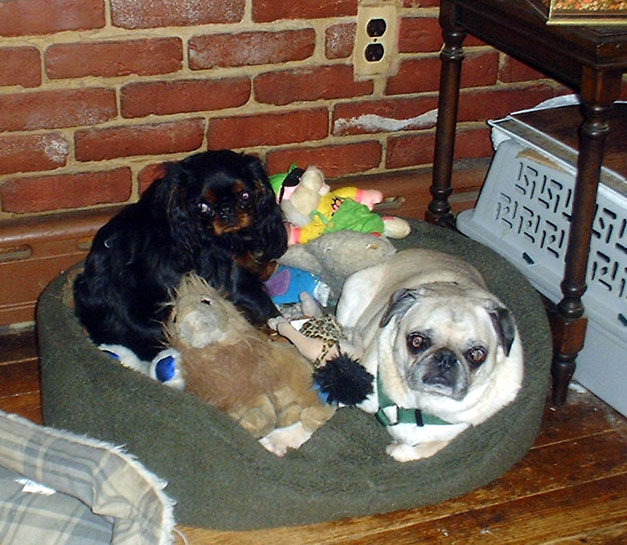 [Missy with Frodo the Pug, March 2002]