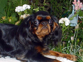 Banner at 10 months, photo taken July 2003