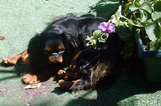 [Missy in the garden, July 2001]