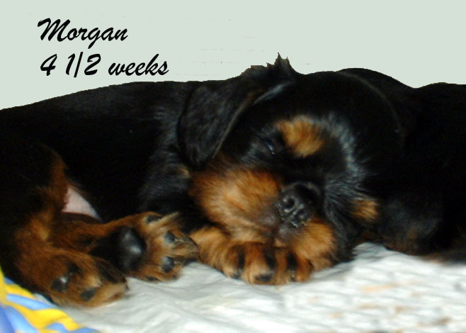 Morgan at 4 ½ weeks, asleep