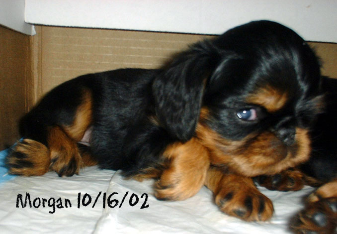 Morgan at 4 ½ weeks